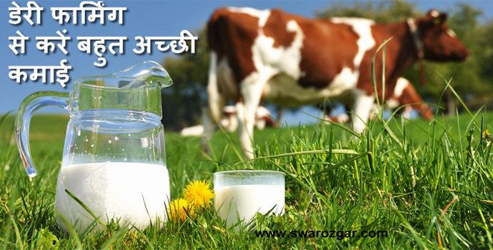 dairy farming business