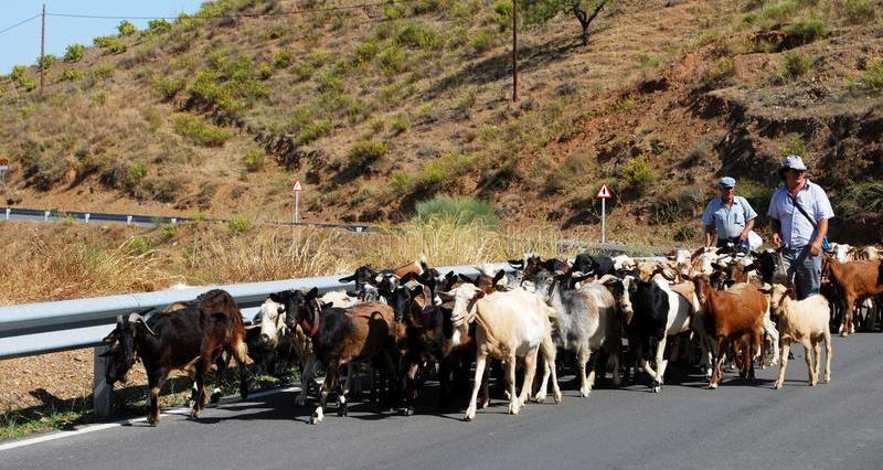 goat farmer